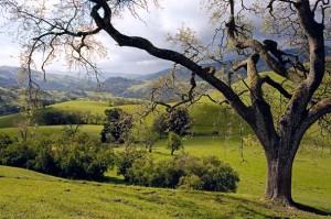 Oak frame hills6x9a 2